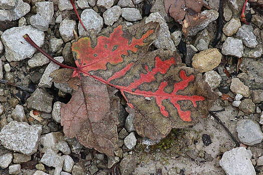 Fall by Vicki Genna