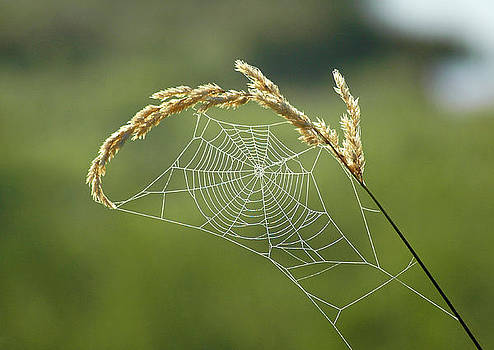 Fall Web by Annie Pflueger