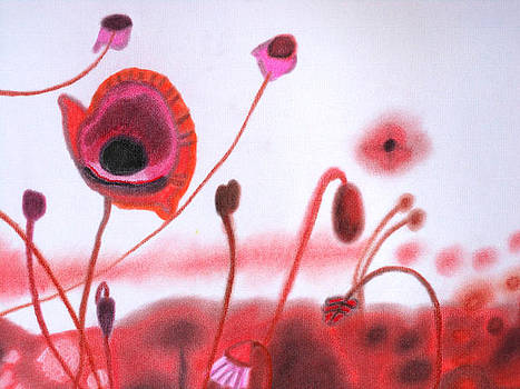 Field Of Red Poppies by Christine Perry
