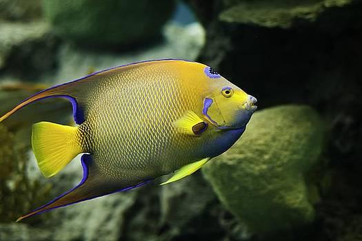 Fish Rising by Edward Khutoretskiy