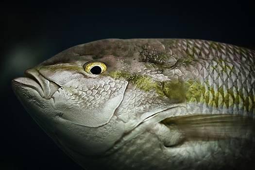 Fisheye by Edward Khutoretskiy