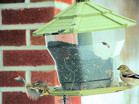 Flight at the birdfeeder by Gary Pavlosky