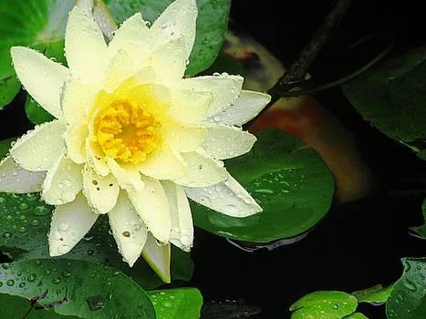 Floral Rain HDR by Michelle Wiltz
