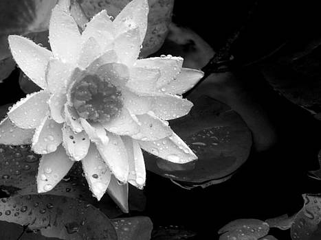 Floral Rain by Michelle Wiltz