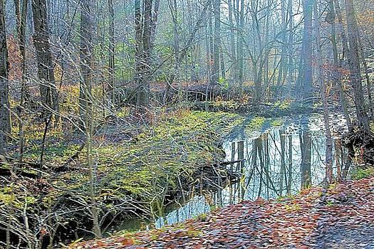 Forest Serenity by Gary Pavlosky