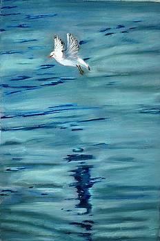 Freedom to fly by Sibella Talic