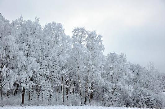 Frost by Alda Villiljos