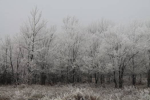 Frost Forest by Alicia Knust