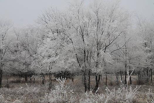 Frosty Day by Alicia Knust