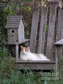 Garden Cat by Tracy L Teeter