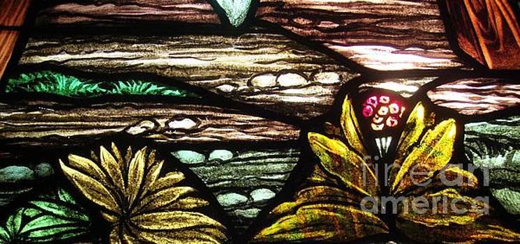 Garden Illumination by Elizabeth Briggs