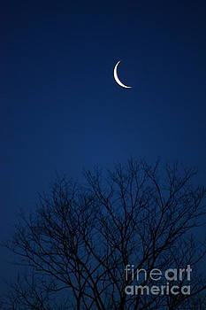 Good morning Moon by Jay Nodianos
