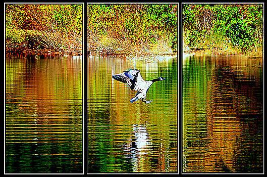 Goose Triptych...... by Tanya Tanski