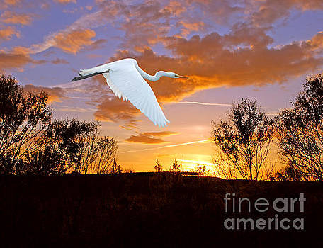Graceful Fly By by Adele Moscaritolo