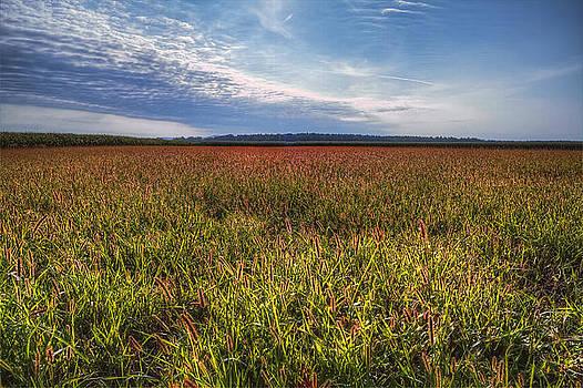 Grass Lands by Vjekoslav Antic