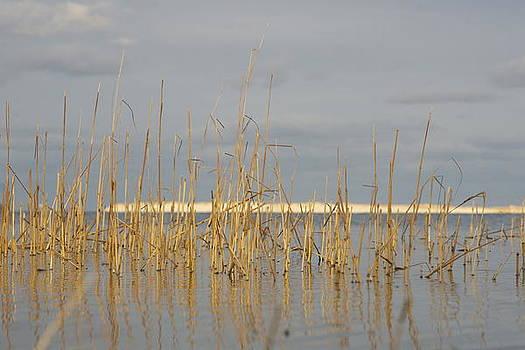 Grass Work by Eugene Bergeron