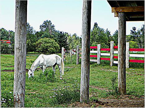 Grazing In the Meadow by Dianne  Lacourciere