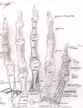 Hand Anatomy Sketchbook by Rebecca Tacosa Gray