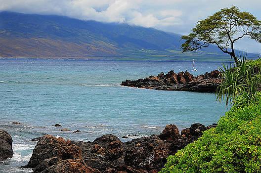 Hawaii Coast by Greg Thelen