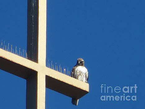 Holy Hawk by Shawn Minor