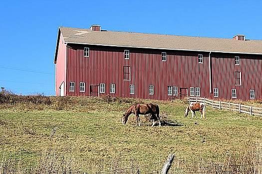 Horses by Gary Pavlosky