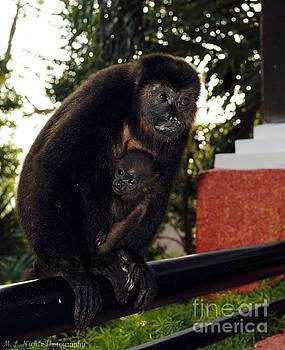 Howler Monkeys by Melissa Nickle