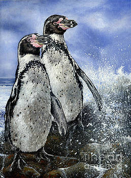 Humboldt Penguins by True Image