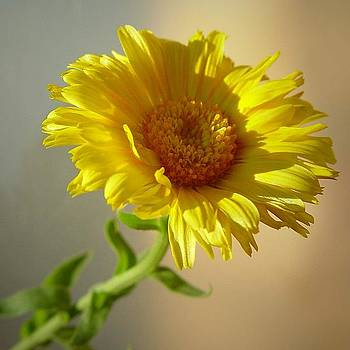 I'm all Yellow by Ilona Stefan