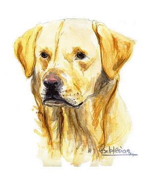 Labrador by David Iglesias