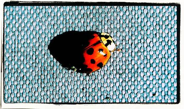 Lady Bug by Gary Pavlosky