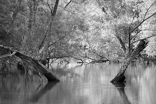 Lake Reflections by Misty Stach
