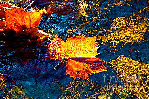 Leaf in the Stream by Jay Nodianos