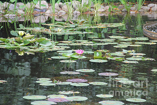 Lily Pond by Rosemary Aubut