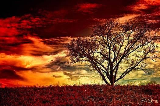 Lone Tree Sunset by Gene Linzy