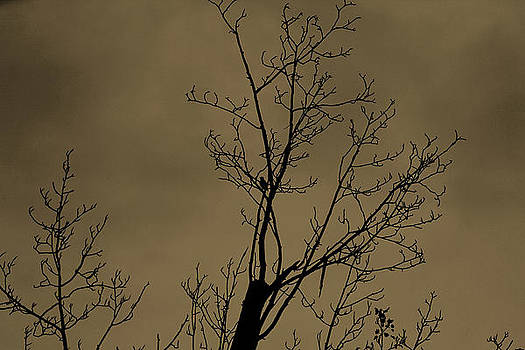 Lonely Bird by Rajkiran Ghanta