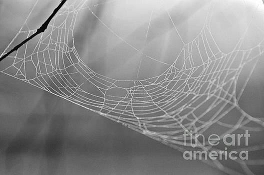 Lonely Web by Dawne Dunton