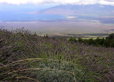 Maui Lavender Farm by Robert Lozen