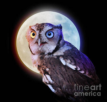 Mysterious Owl Animal at Night with Full Moon by Angela Waye