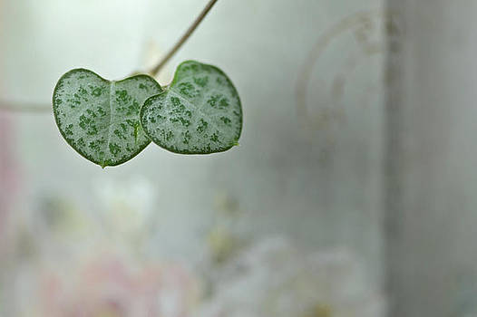 Natural hearts by Lotte Funch