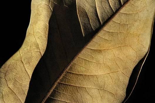 Natural Seduction by Dan Holm