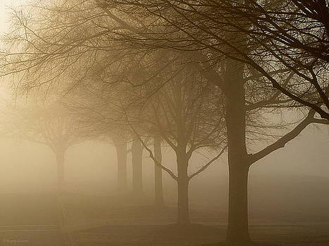 Oaks in the Fog by Greg Simmons