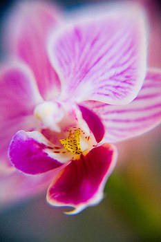 Orchide detail 2 by Kim Lagerhem