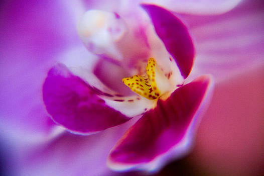 Orchide detail by Kim Lagerhem