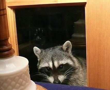 Peek-a-boo Darling Ill by Jacquelyn Roberts