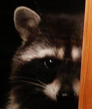 Peek-a-boo Darling by Jacquelyn Roberts