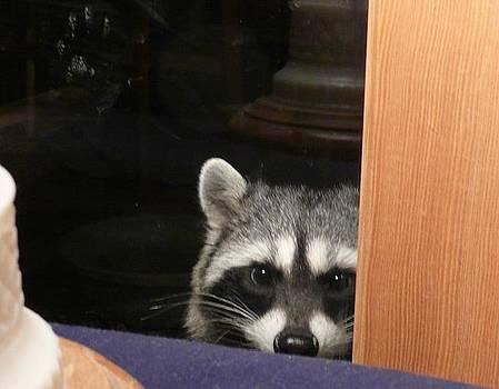 Peek-a-boo Darling Vllll by Jacquelyn Roberts