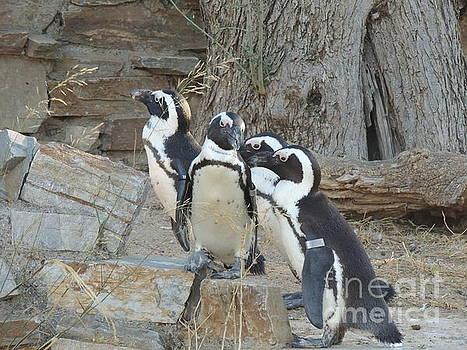 Penguin friends by Paraskevas Momos