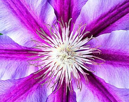 Petal Purple by Michelle Wiltz
