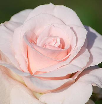 Pink Promise by Nancy Edwards