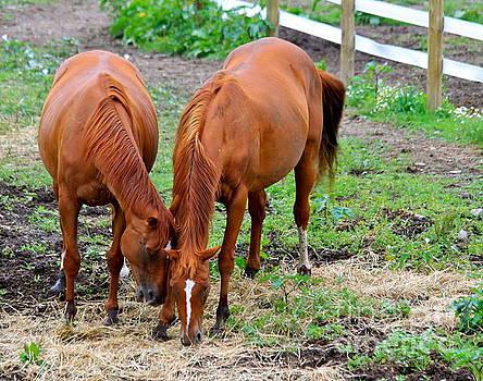 Pony Love by Jay Nodianos